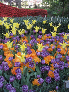 A-profusion-of-color-in-tulips-and-textile-art,-Madison-Square-Park