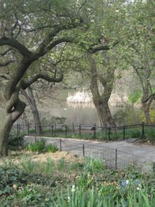 The-Pond,-Central-Park